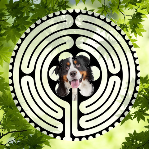 Bernese - Doggy Labyrinth-maze