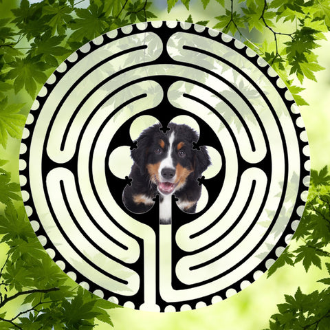Bernese Puppy - Doggy Labyrinth-maze
