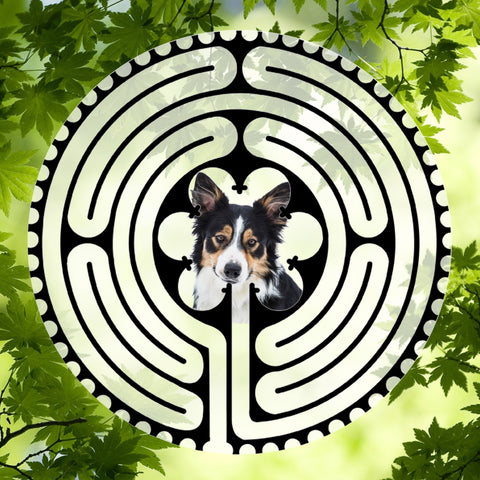 Border Collie Puppy - Doggy Labyrinth-maze