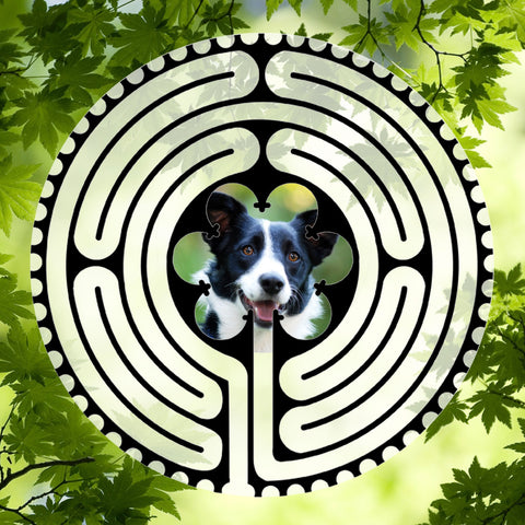 Border Collie - Doggy Labyrinth-maze