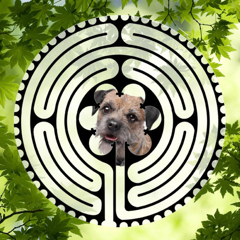 Border Terrier - Doggy Labyrinth-maze
