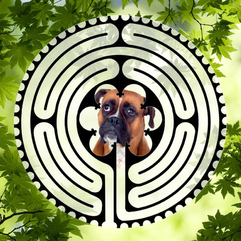 Boxer Front View - Doggy Labyrinth-maze