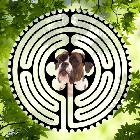 Boxer Puppy Brown - Doggy Labyrinth-maze