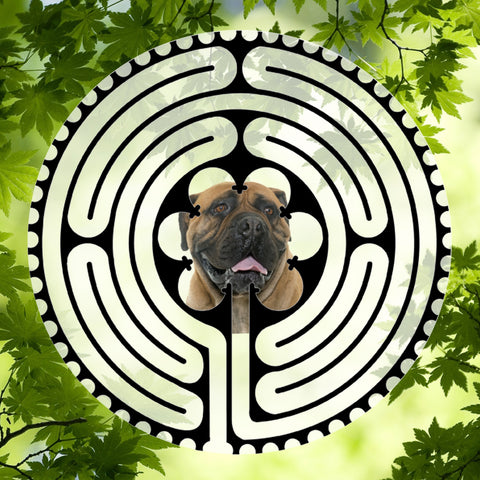 Bull Mastiff Light - Doggy Labyrinth-maze