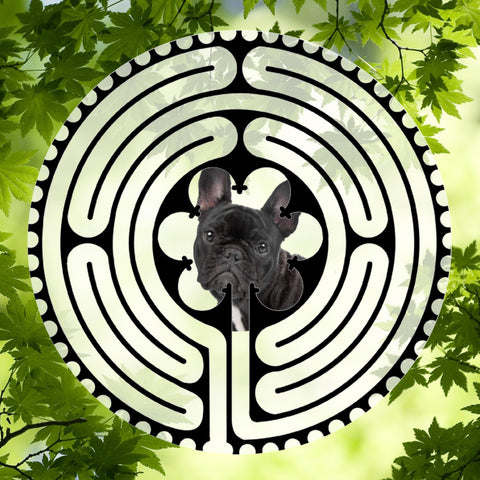 Bulldog French Black - Doggy Labyrinth-maze