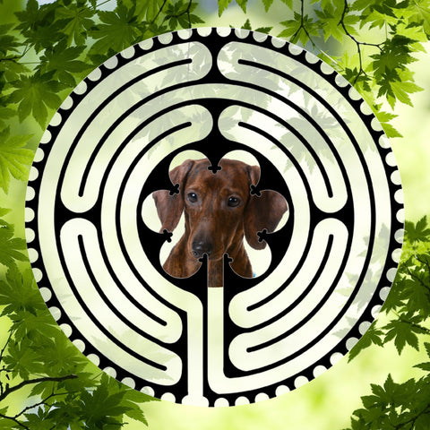 Dachshund Puppy - Doggy Labyrinth-maze