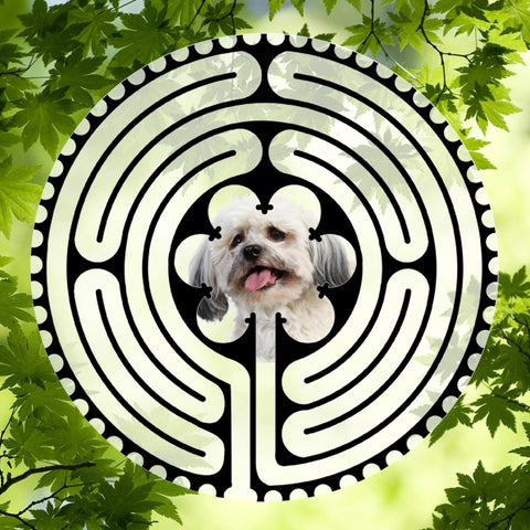 Havanese Light Doggy Labyrinth-maze
