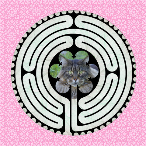 Main Coon Grey, Kitty-Kat Labyrinth-maze