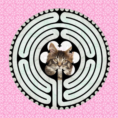 Main Coon Kitten, Kitty-Kat Labyrinth-maze