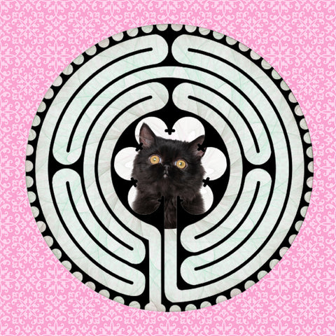 Persian Black, Kitty-Kat Labyrinth-maze