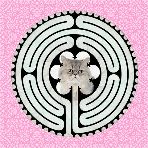 Persian Grey, Kitty-Kat Labyrinth-maze