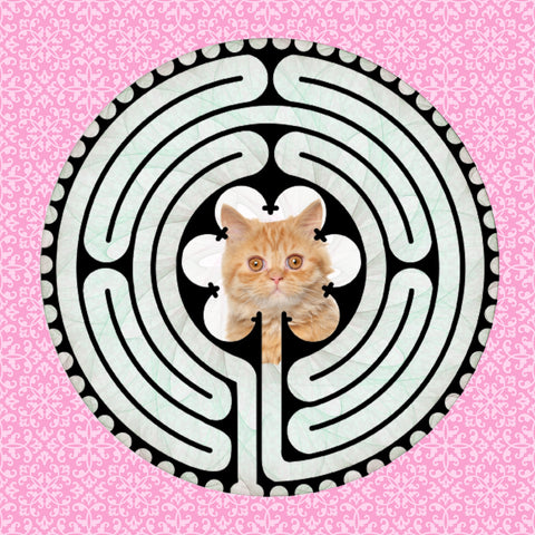 Persian Kitten, Kitty-Kat Labyrinth-maze