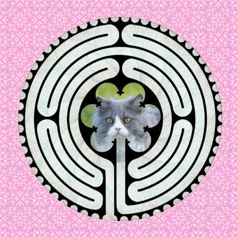 Ragdoll Grey, Kitty-Kat Labyrinth-maze