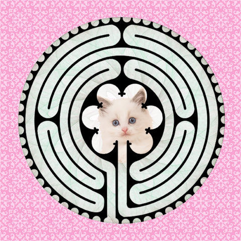 Ragdoll Kitten, Kitty-Kat Labyrinth-maze