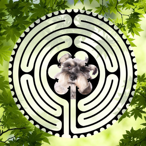 Schnauzer Salt-Pepper- Doggy Labyrinth-maze