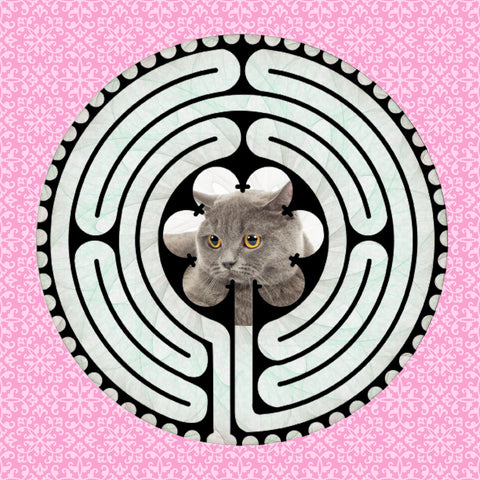 Scottish Fold Grey, Kitty-Kat Labyrinth-maze