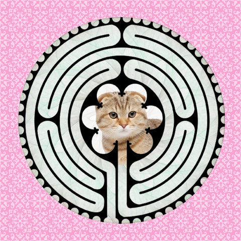 Scottish Fold Kitten, Kitty-Kat Labyrinth-maze
