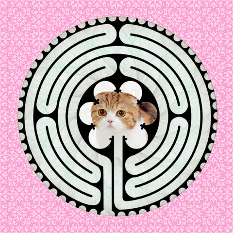 Scottish Fold Stripe, Kitty-Kat Labyrinth-maze