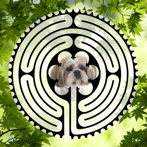 Shih Tzu Tan - Doggy Labyrinth-maze