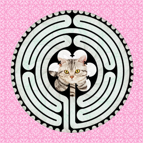 Shorthair American BW, Kitty-Kat Labyrinth-maze