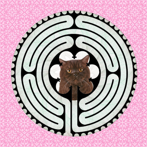Shorthair American Brown, Kitty-Kat Labyrinth-maze