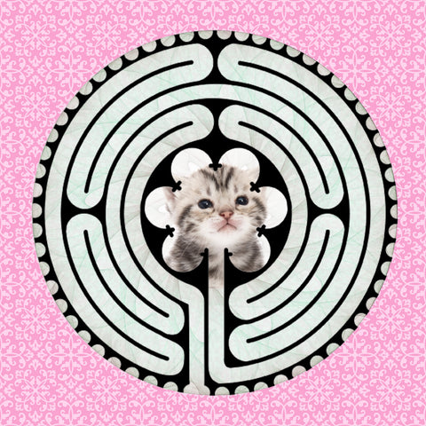 Shorthair American Kitten, Kitty-Kat Labyrinth-maze
