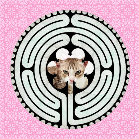 Shorthair American Red, Kitty-Kat Labyrinth-maze