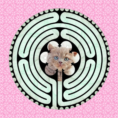 Shorthair British Kitten, Kitty-Kat Labyrinth-maze