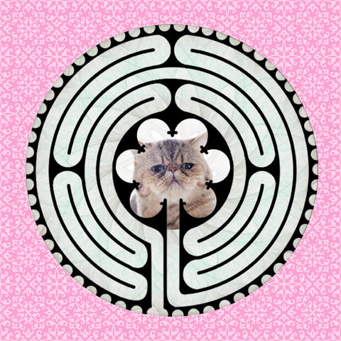 Shorthair Exotic Kitten, Kitty-Kat Labyrinth-maze