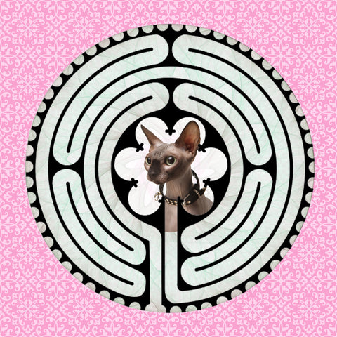 Sphynx Grey, Kitty-Kat Labyrinth-maze