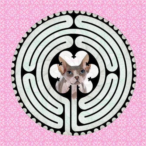 Sphynx White/Grey, Kitty-Kat Labyrinth-maze