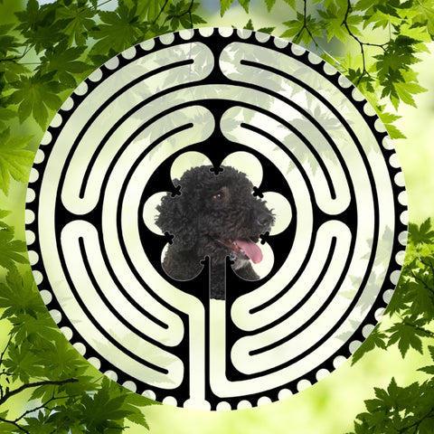 Portuguese Waterdog - Doggy Labyrinth-maze