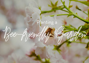 Drizzle Honey How to Plant a Bee-friendly Garden