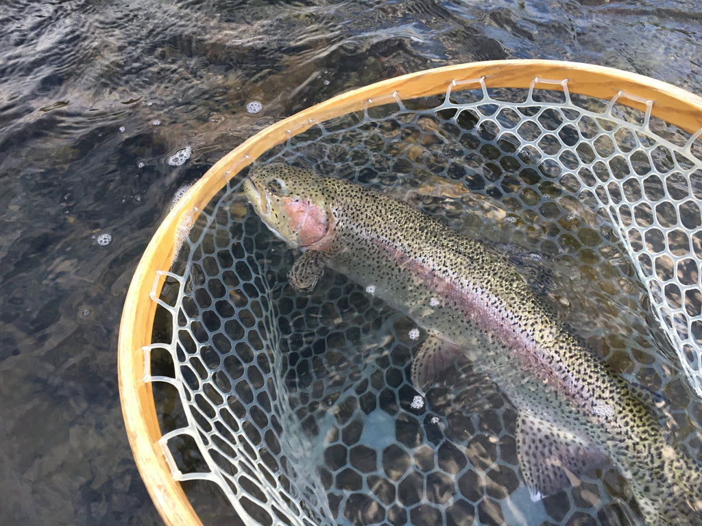 Madison River Fishing Report 5/1