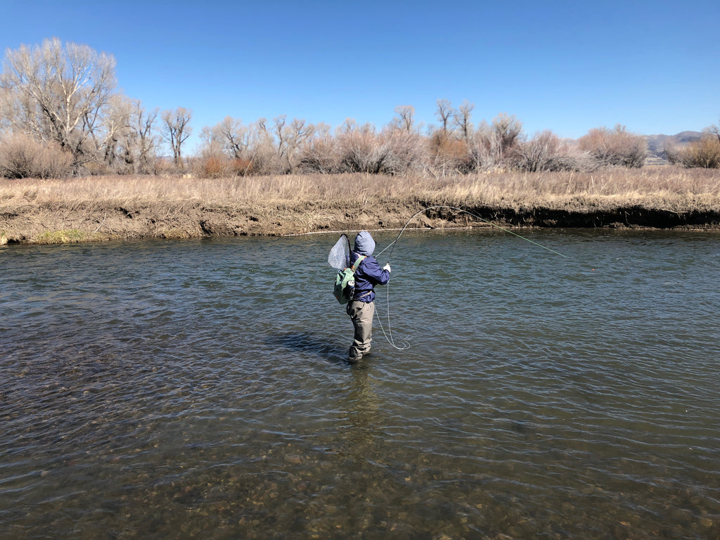 Fighting a fish in a side channel of the Madison River. Ennis, Montana