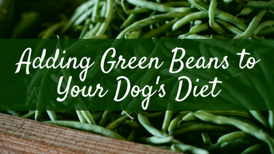 Managing Dog's Weight with Green Beans