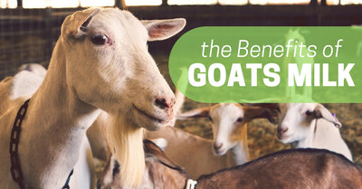 The Benefits of Goats Milk