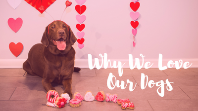 What K9 Granola Customers Love Most About Their Dogs