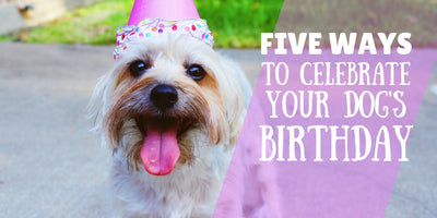 5 Ways to Celebrate Your Dog's Birthday