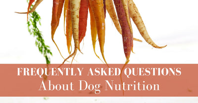 Frequently Asked Questions About Dog Nutrition