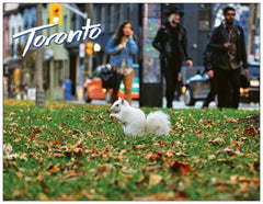Toronto Wildlife Postcards