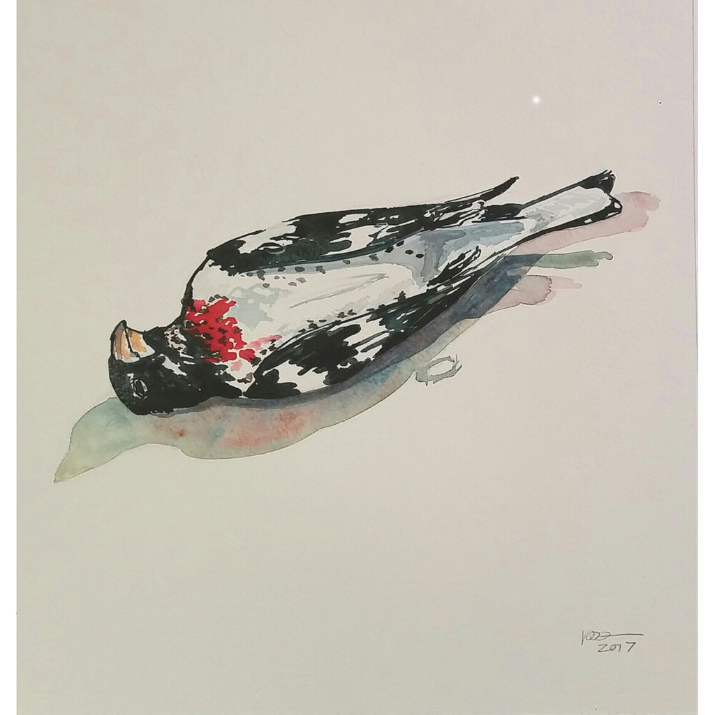 Window Strike Series, Rose Breasted Grosbeak III