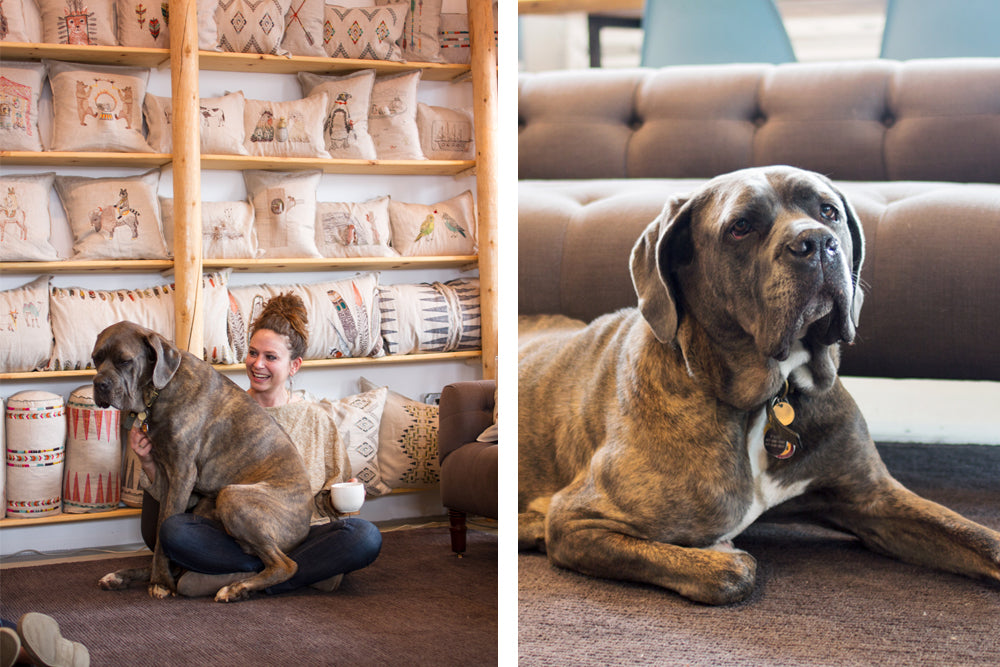 Stephanie housley and her dog paco in coral & tusk studio | k colette