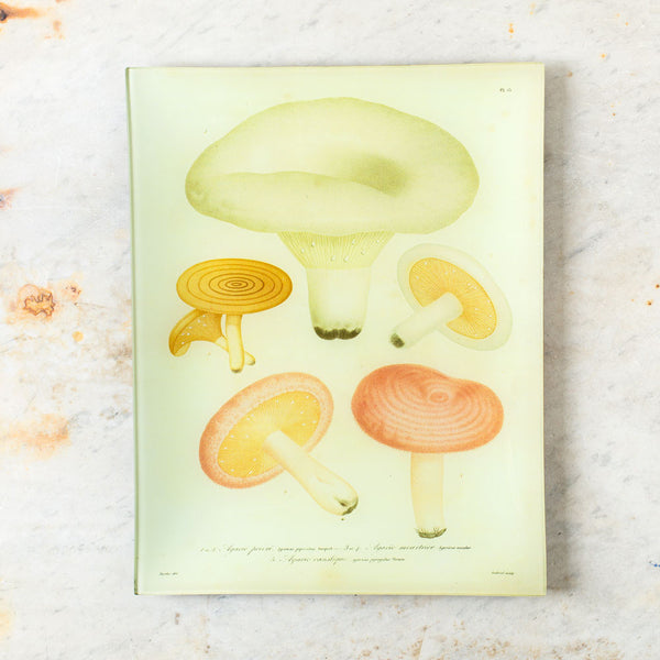 mushrooms no. 13 tray-art & decor - decoupage-john derian-k colette