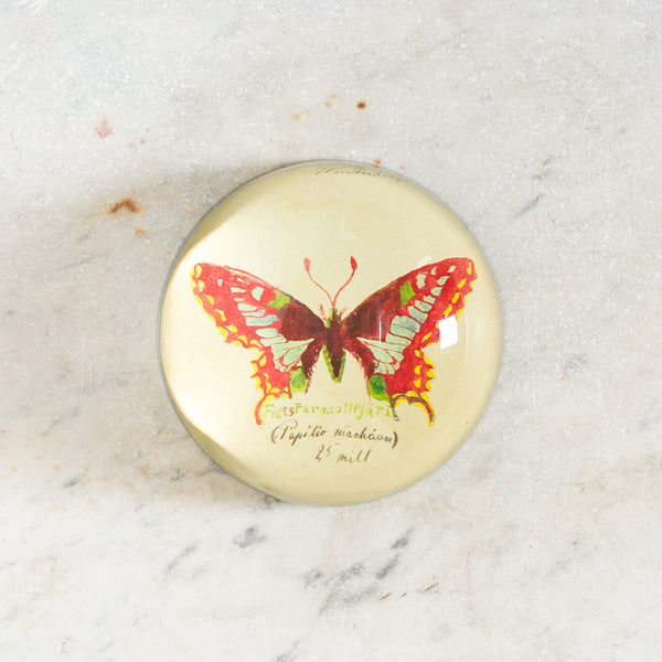 papilio machaan dome paperweight-art & decor - decoupage - desktop - paperweights-john derian-Default-k colette