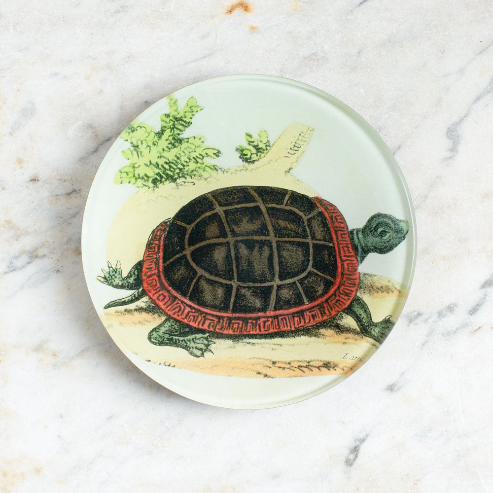 land turtle round plate-art & decor - decoupage-john derian-Default Title-k colette
