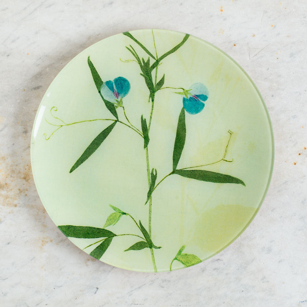 no. 29 polemonivm (jacob's ladder) pressed leaves round plate-art & decor - decoupage-john derian-k colette