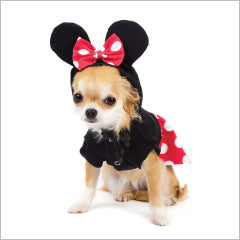 Chihuahua wearing dog mouse costume