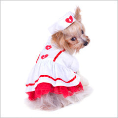 Yorkie wearing Dog Nurse Costume