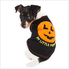 Puppy wearing pumpkin dog costume